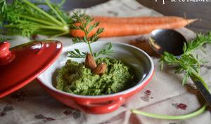 Pesto de fanes de jeunes carottes