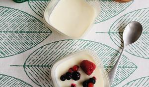 Panna cotta légère au yaourt et aux fruits rouges
