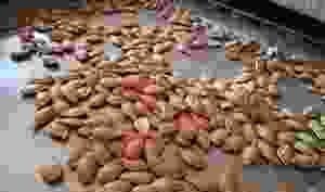 Graines de Potiron