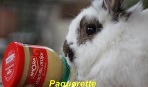 Le lapin à la moutarde malgré Pâquerette