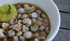 Une ration d'escargots