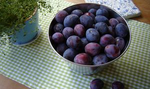 Bol de prunes violettes