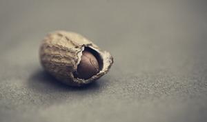 Cacahuète dans sa gousse