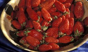 Bol de fraises Garriguettes