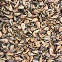 Crevettes grises en vrac